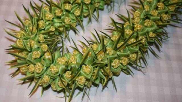 グリーンアイスカラセア